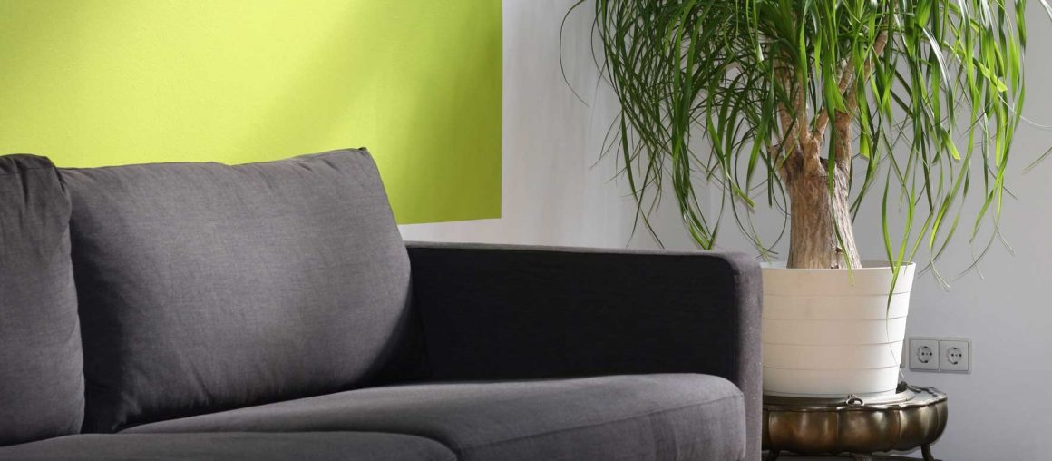 Sofa Cleaning Rathmines